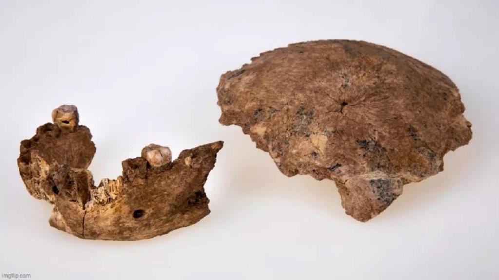 Ancêtre humain inconnu déterré en Israël. Il avait de grandes dents mais pas de menton (vidéo) By Jack35 Nouvel10