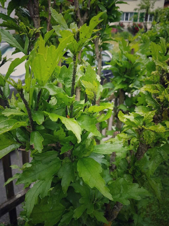 Озеленение балкона  СН - Страница 20 20190610
