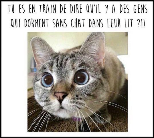 Chats alors !!! Chat310