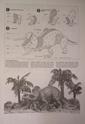 обзор тираннозавр и трицератопс 1:35 от TAMIA №60203 и №60201  0513