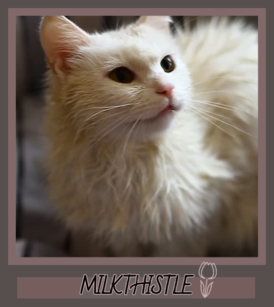 goosekit for windclan mca Milkth10