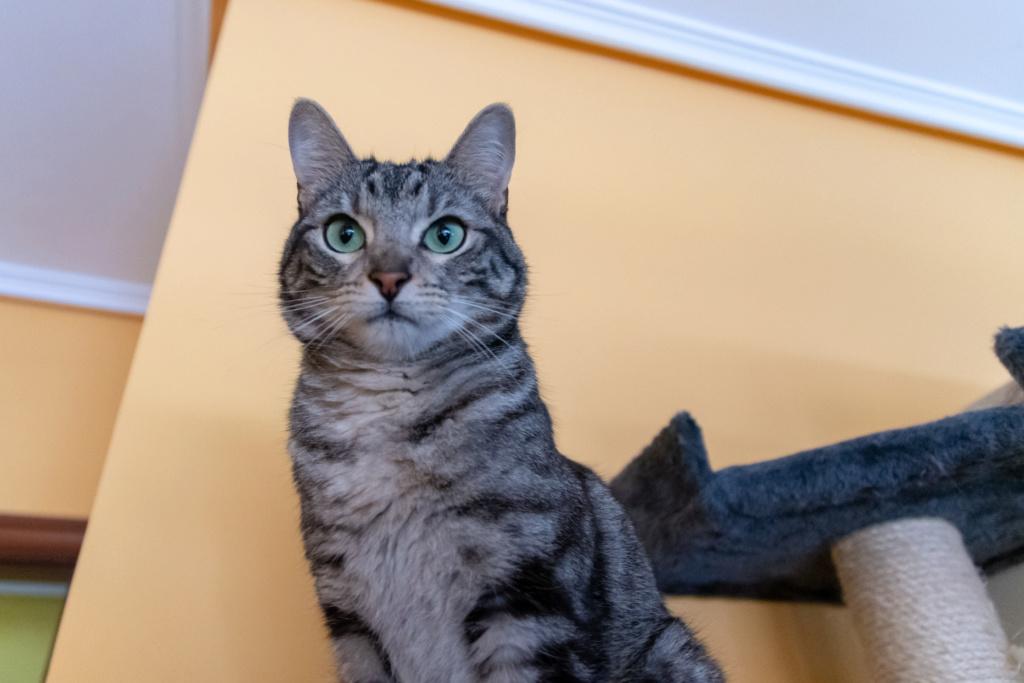 Baloo adoptado en Vitoria 001_2011