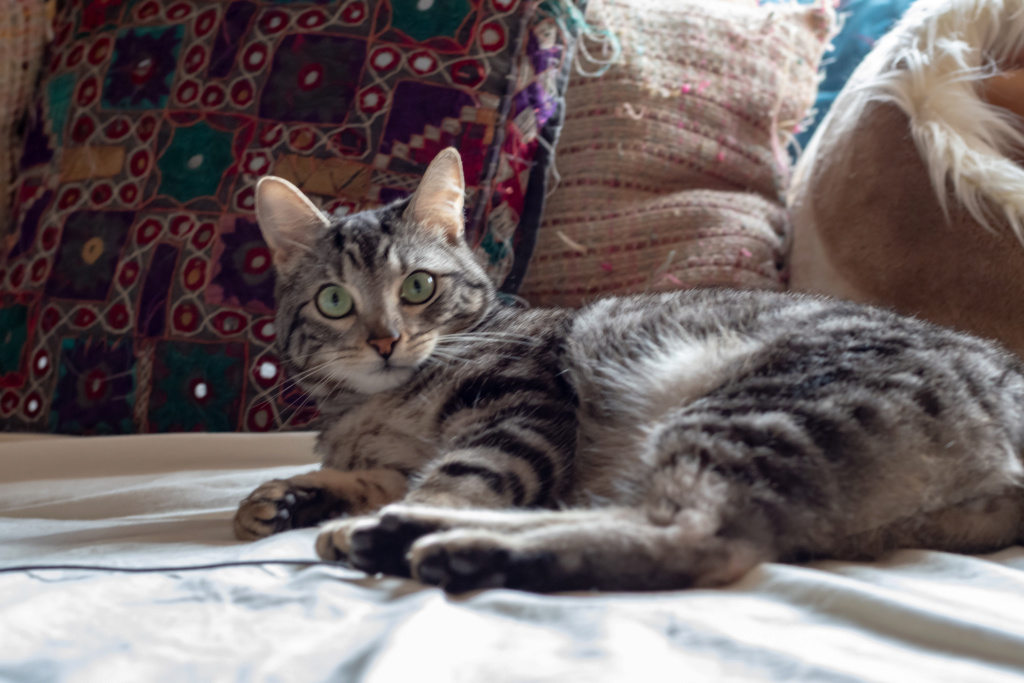 Baloo adoptado en Vitoria 003_2012