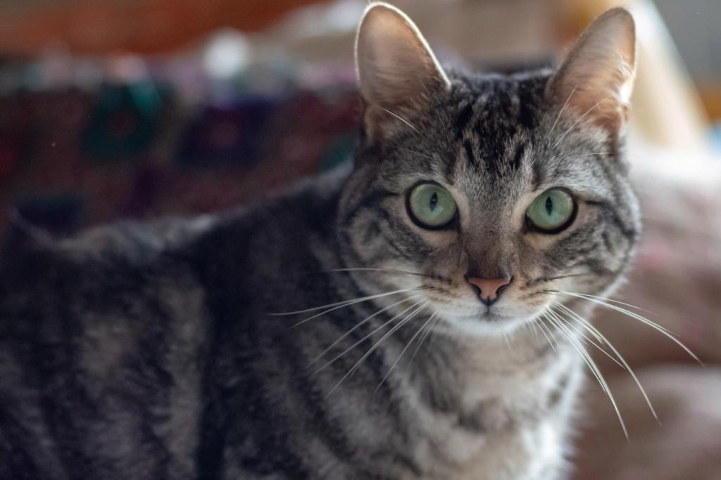 Baloo adoptado en Vitoria 004_2011