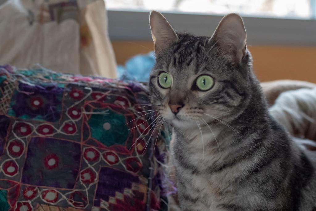 Baloo adoptado en Vitoria 005_2011