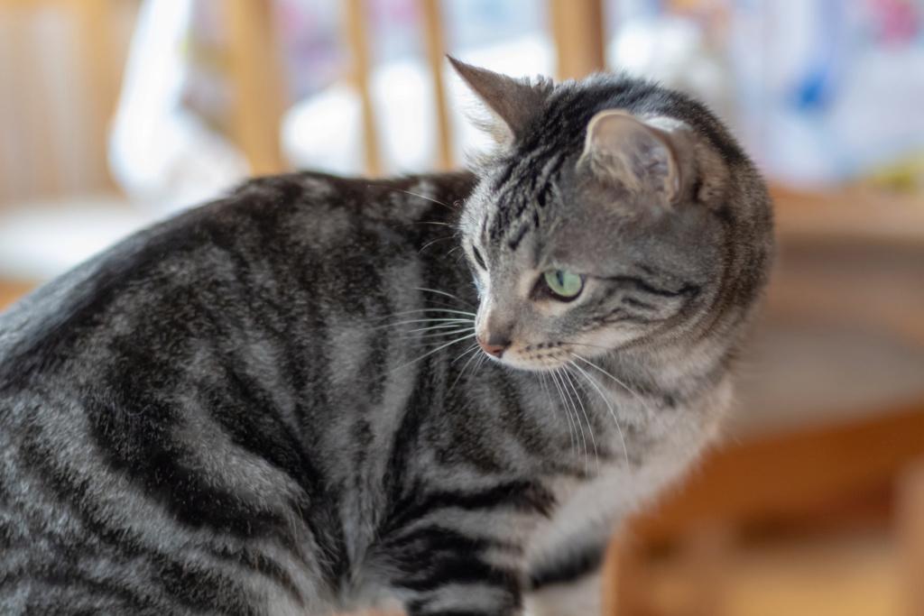 Baloo adoptado en Vitoria 006_2011