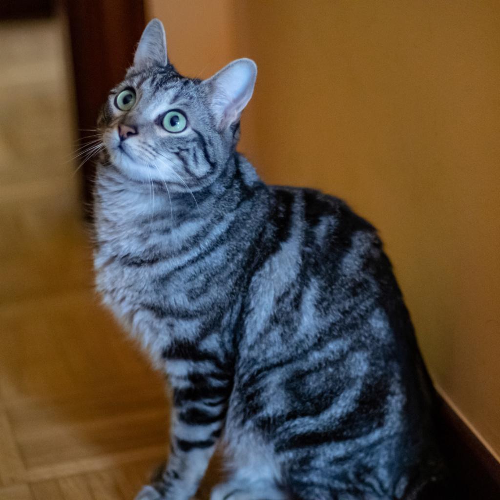 Baloo adoptado en Vitoria 007_2011