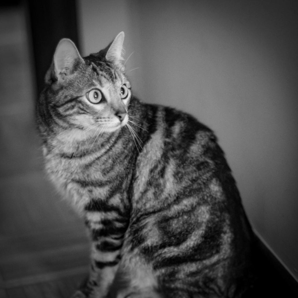 Baloo adoptado en Vitoria 008_2011