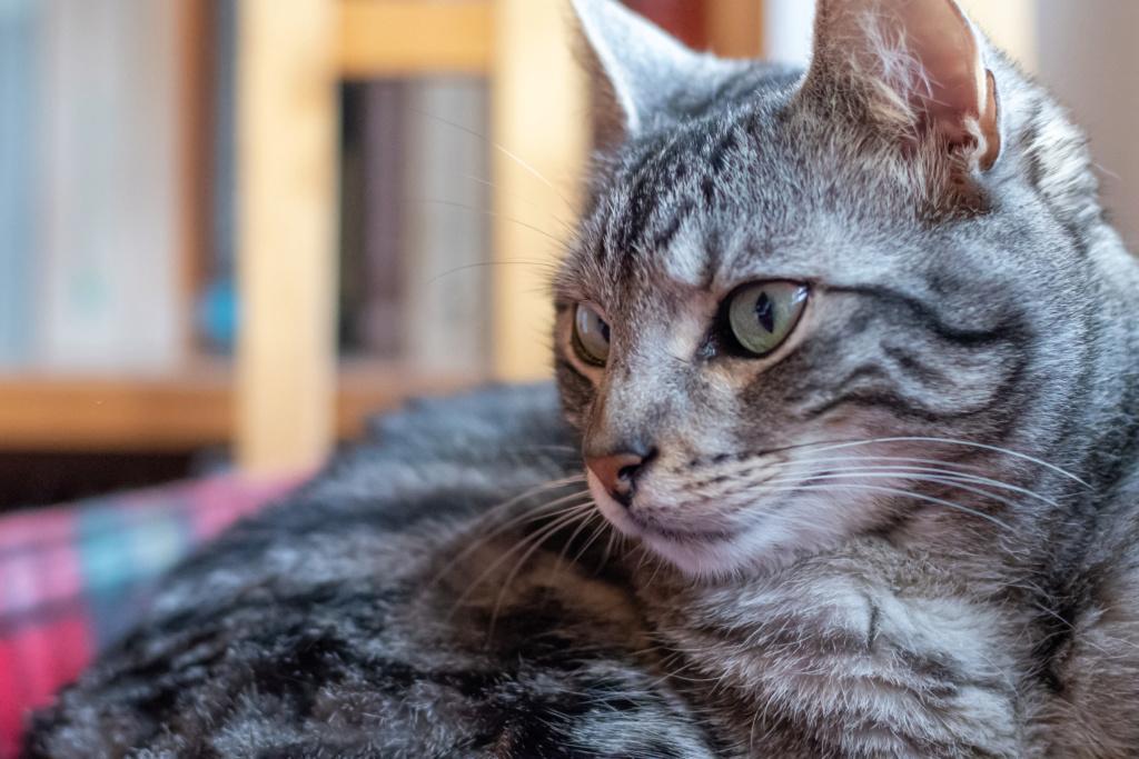 Baloo adoptado en Vitoria 011_2023