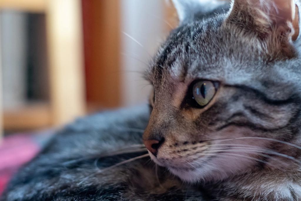 Baloo adoptado en Vitoria 012_2024