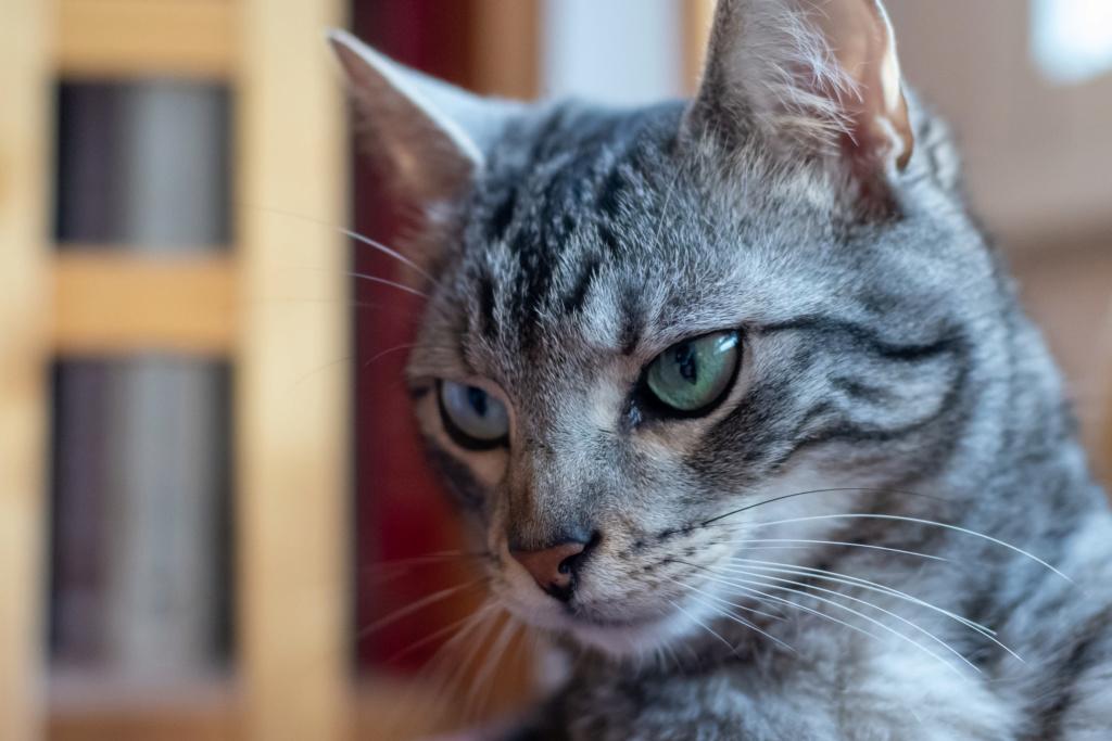 Baloo adoptado en Vitoria 014_2022