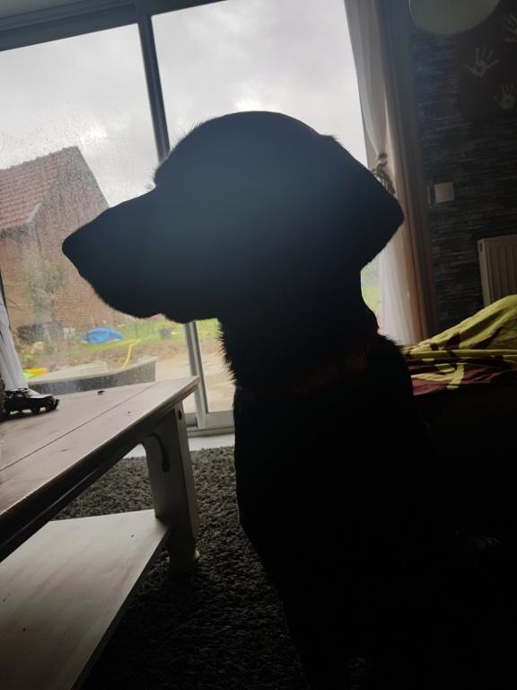 Owen, mâle croisé labrador noir 20180813