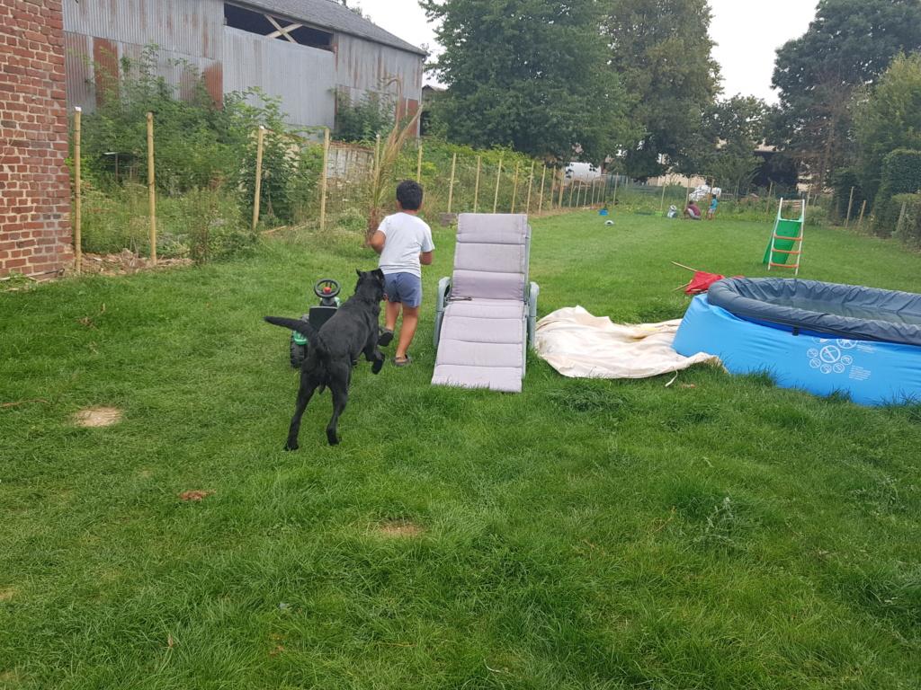 Owen, mâle croisé labrador noir 20180822