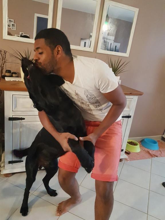 Owen, mâle croisé labrador noir 20180823