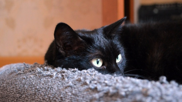 [Jeu] Association d'images - Page 6 Cat_bl10