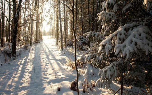 [Jeu] Association d'images - Page 7 Forest10
