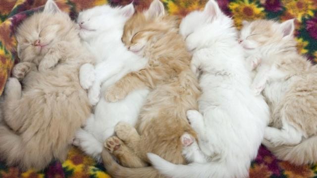 [Jeu] Association d'images - Page 6 Kitten10