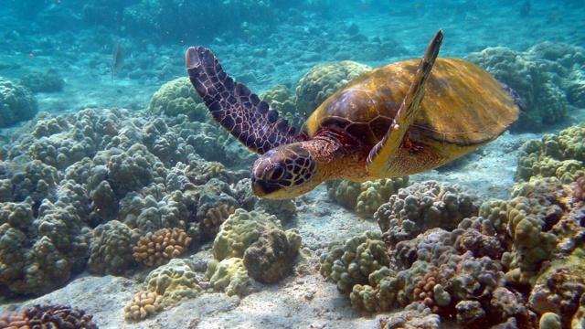 [Jeu] Association d'images - Page 6 Turtle10