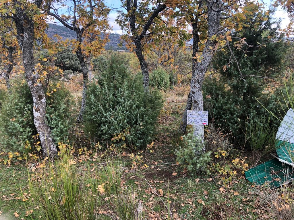 Camp Norton Madrid ubicación y fotos Campno12