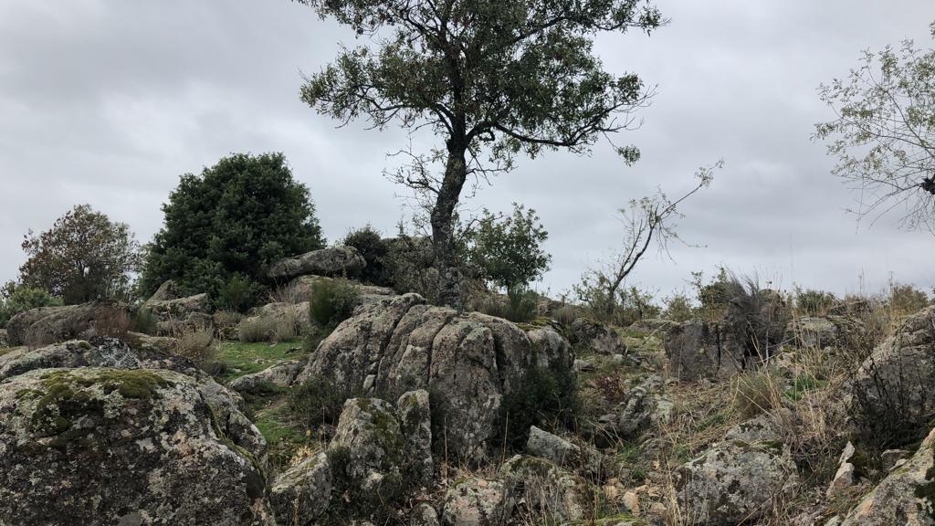 Camp Norton Madrid ubicación y fotos Campno14