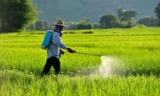 Va-t-on mourir à cause de notre PROPRE alimentation ? Pestic13