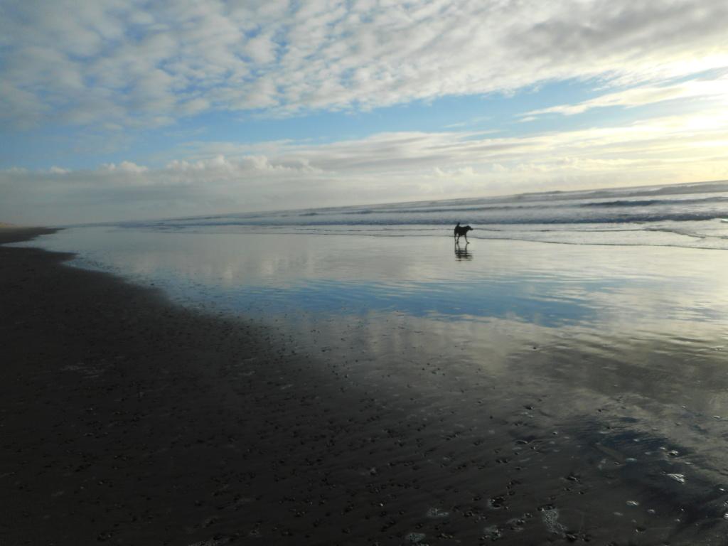 Solitude auprès de l'océan Dscn3310