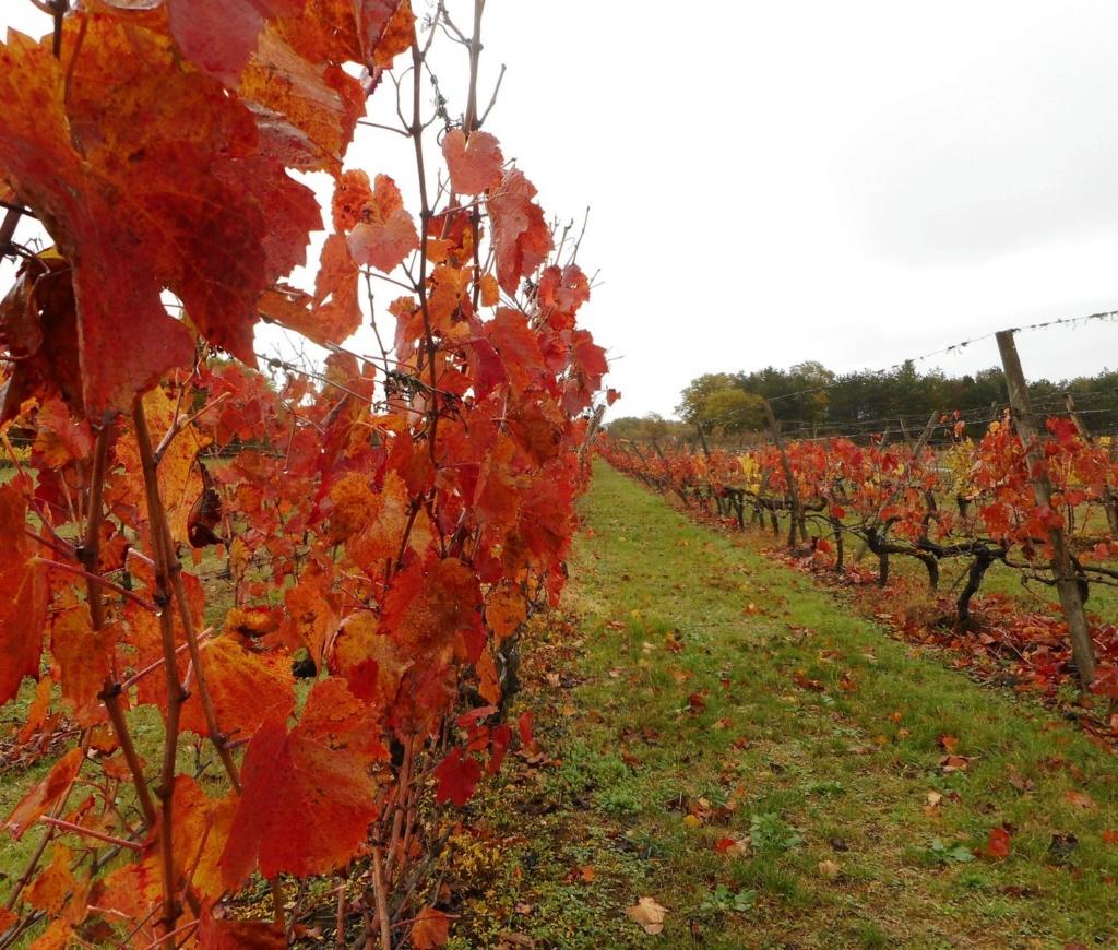 Du rouge vigne Dscn3710