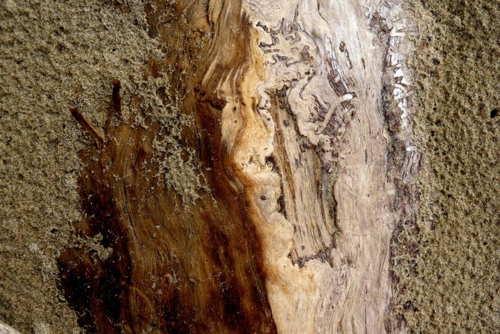De sable et de bois P1120710