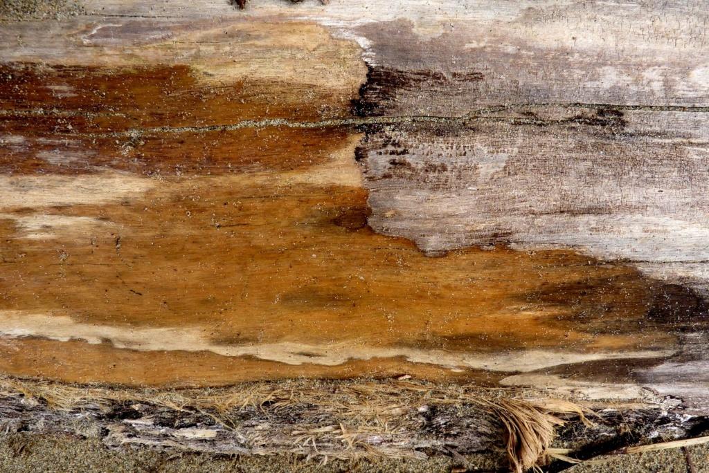 De sable et de bois P1120711