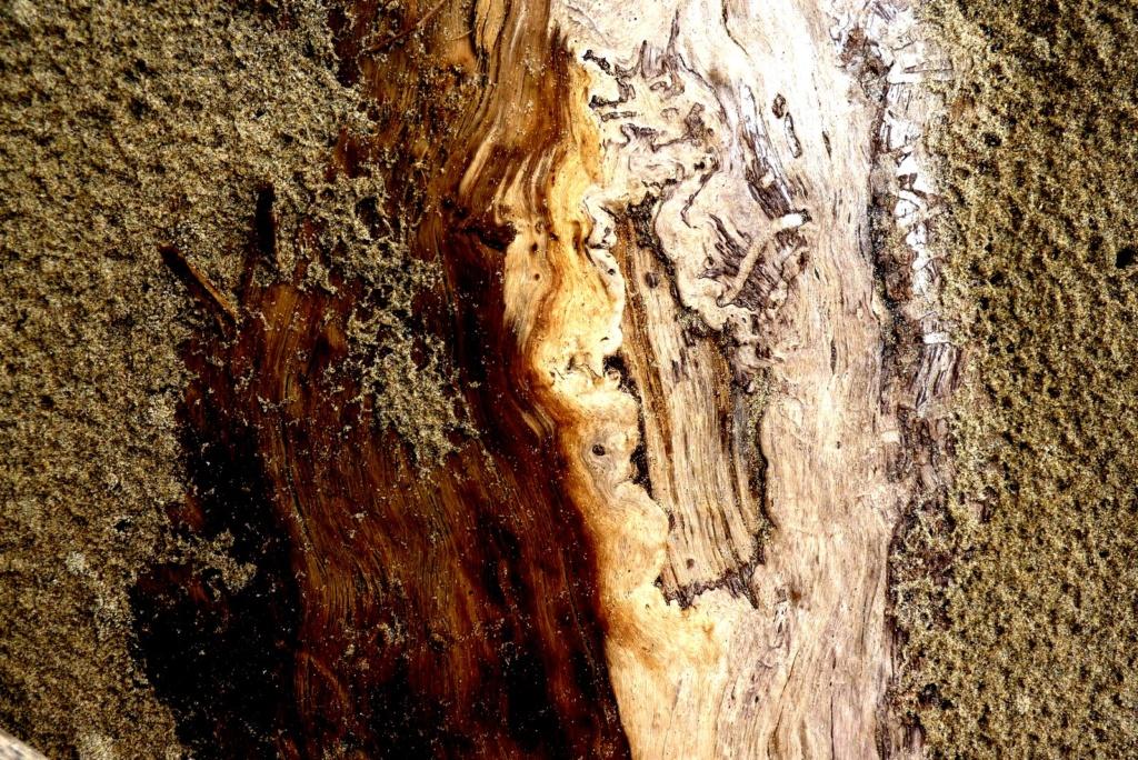 De sable et de bois P1120712
