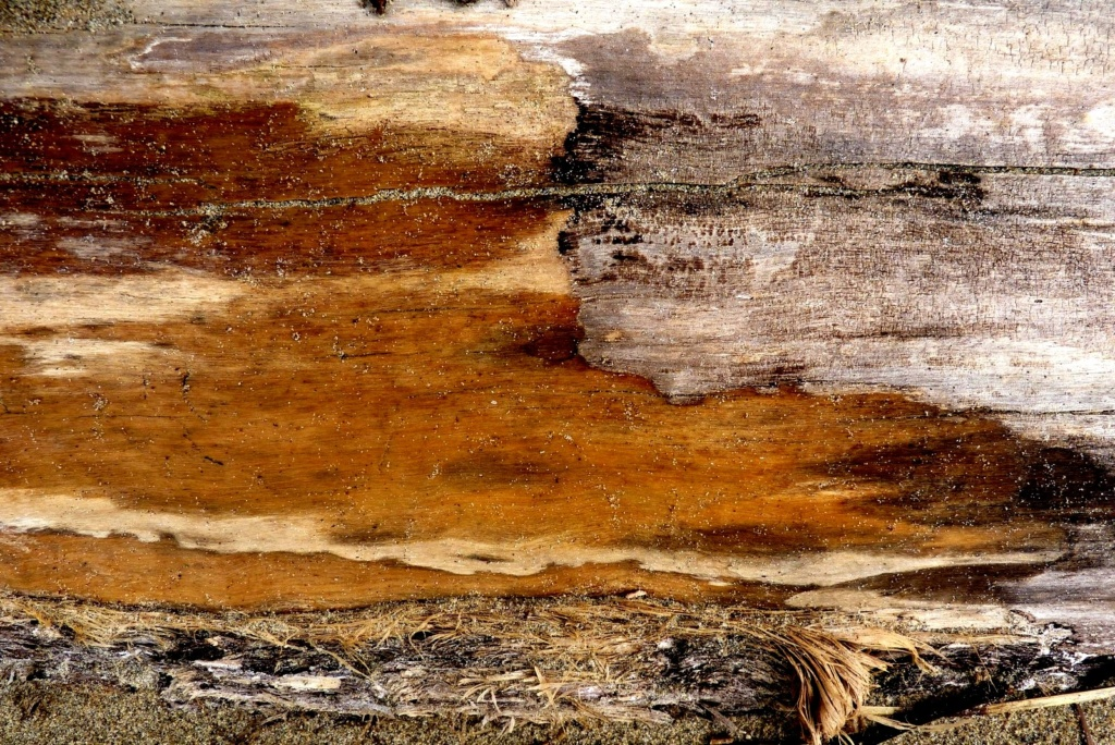 De sable et de bois P1120714