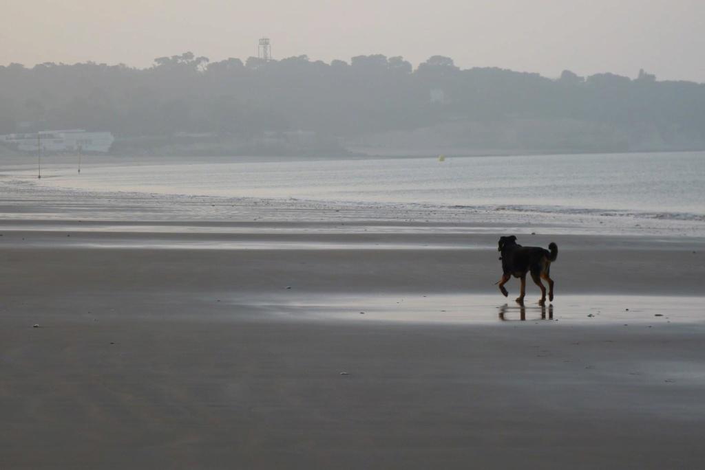 Il était une fois la plage Photo_10