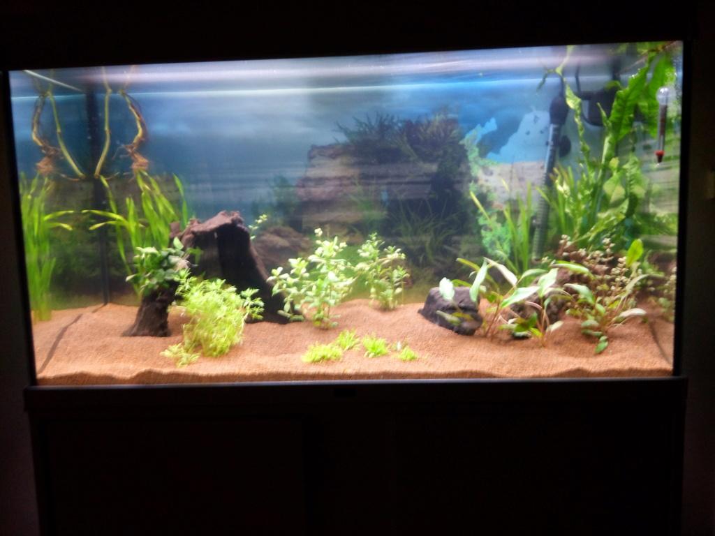 Lancement Aqua 196 L Biotope Asiatique Img_2010