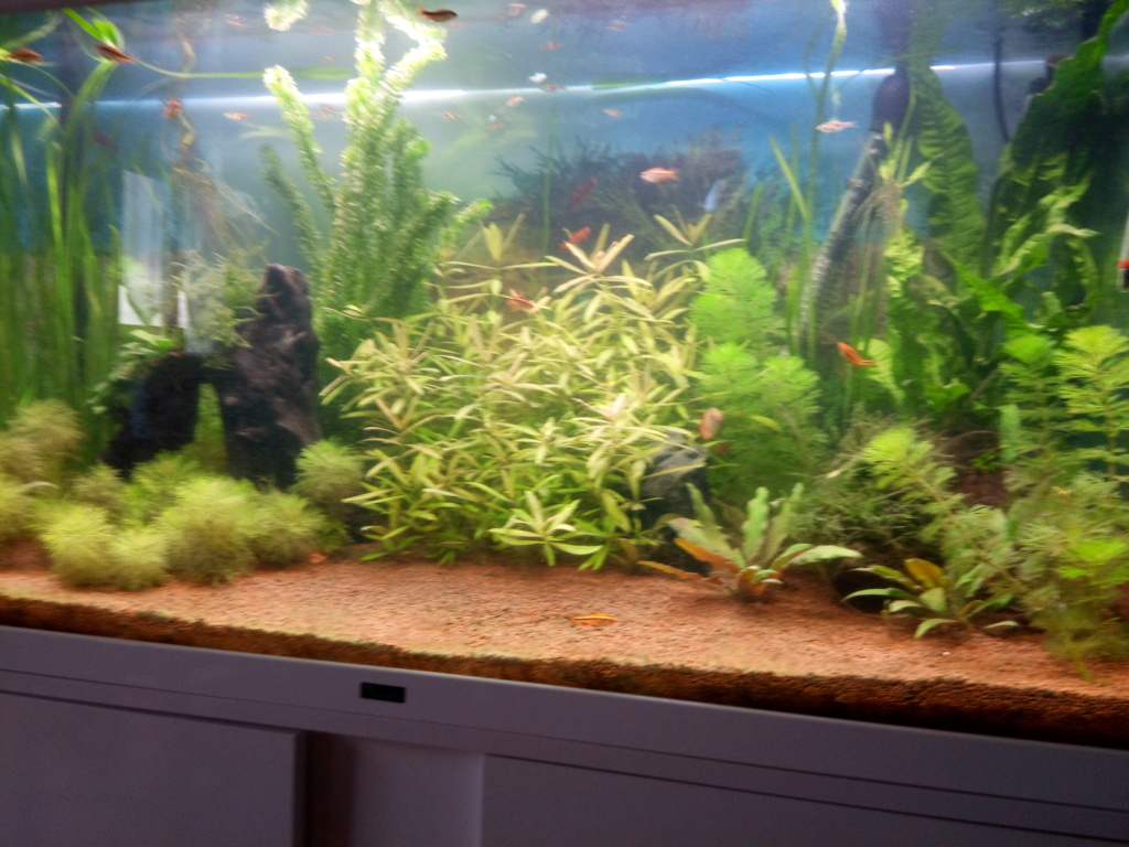 Lancement Aqua 196 L Biotope Asiatique Img_2013