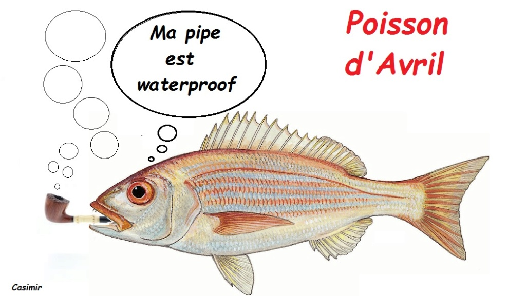 pétunage du 1 avril Poisso10