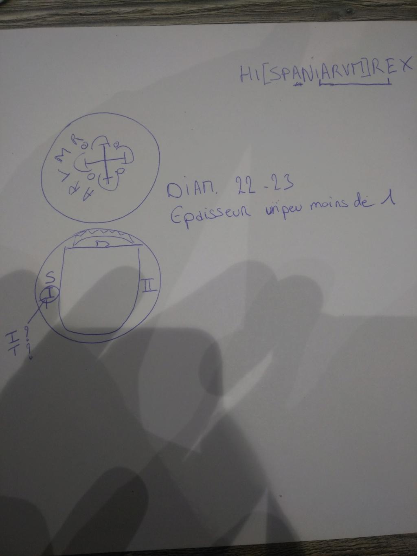 2 escudos or... Img_2013