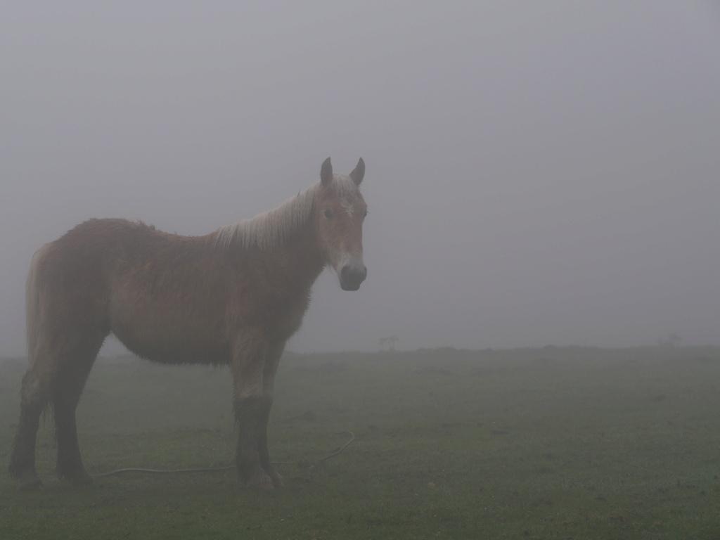 Jeune cheval dans la brume P1011411