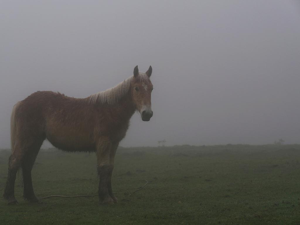 Jeune cheval dans la brume P1011412