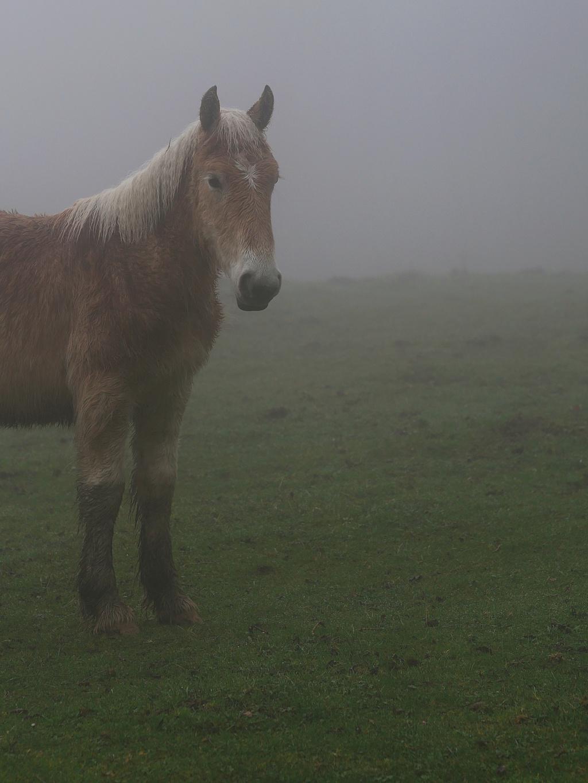 Jeune cheval dans la brume P1011413