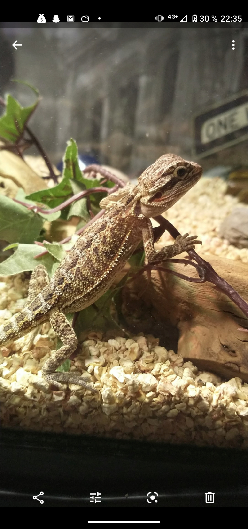 Mon Pogona Screen13