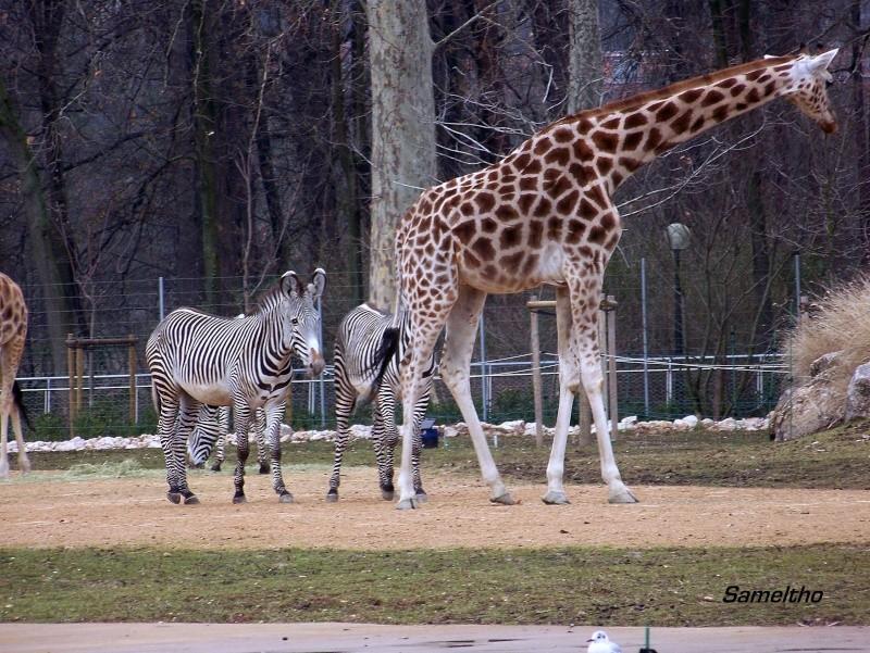 Le zoo de la tete d'or (Lyon) 100_0713