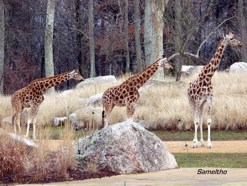Le zoo de la tete d'or (Lyon) 100_0715