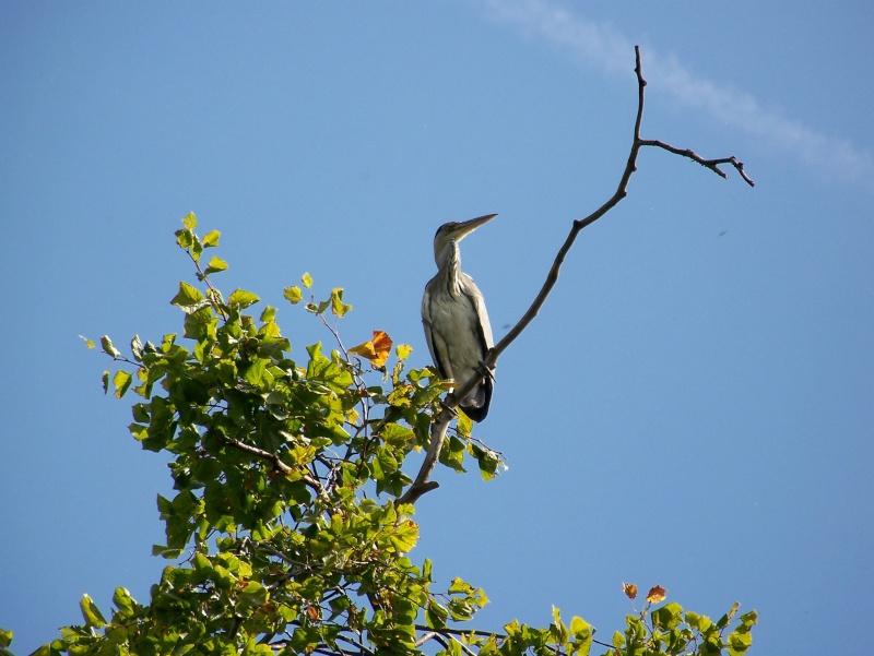 Les oiseaux sauvage que l'on rencontre dans le zoo 100_3110