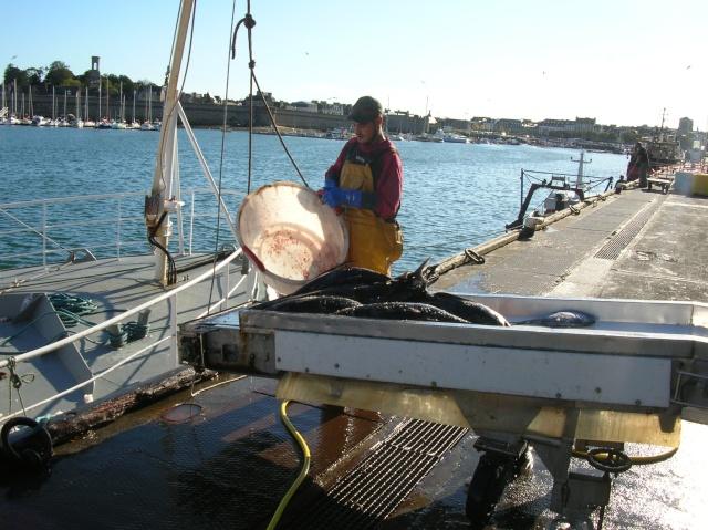 [VIE DES PORTS] Quelques bateaux de pêche (sur nos côtes Françaises) - Page 3 Dscn4411