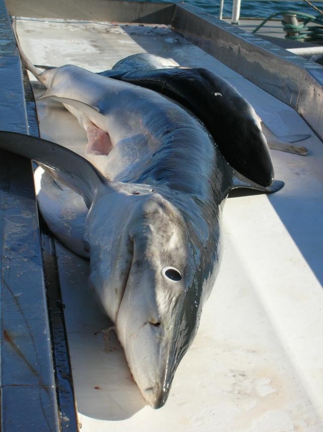 [VIE DES PORTS] Quelques bateaux de pêche (sur nos côtes Françaises) - Page 3 Dscn4515