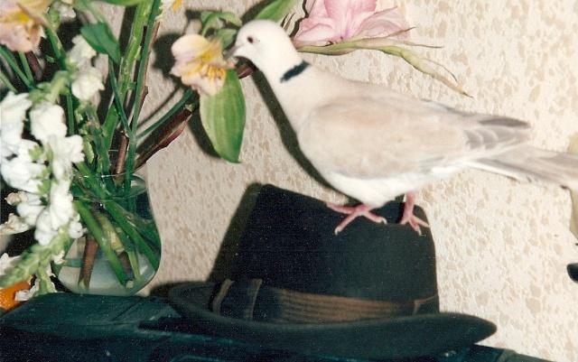 disparition des oiseaux! - Page 2 Numeri10