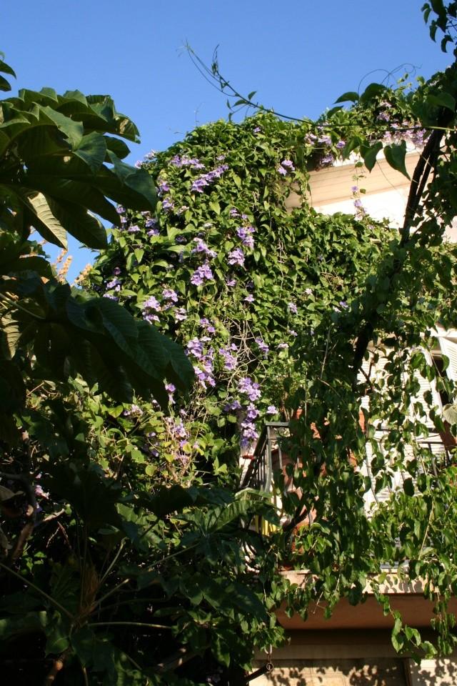 Ce matin , petit tour de jardin Angle_10