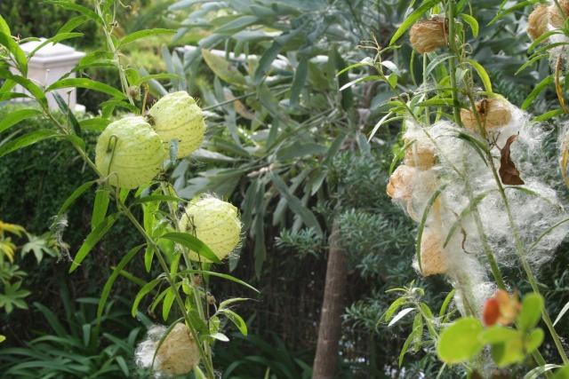 Visite d'un jardin extraordinaire Asclep10