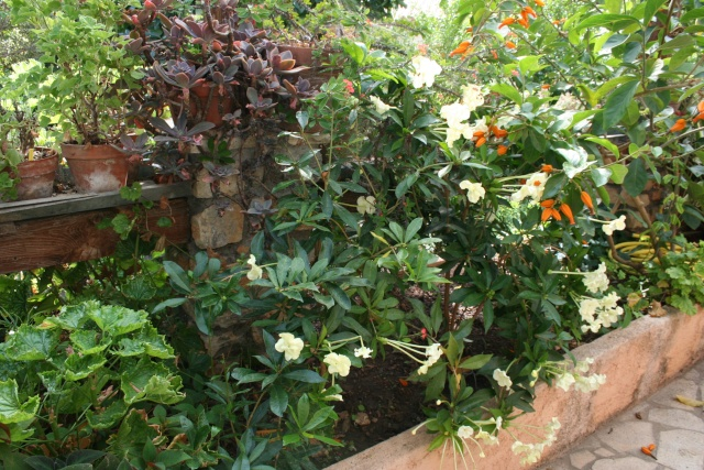 Visite d'un jardin extraordinaire Brunfe10