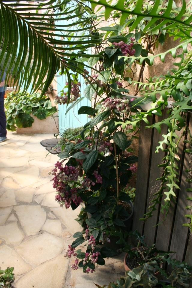 Visite d'un jardin extraordinaire Clrode10